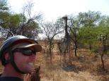 Giraffe selfir